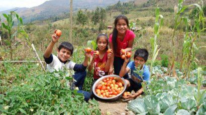 Canchaque | 30 colegios crean huertos para complementar almuerzos escolares