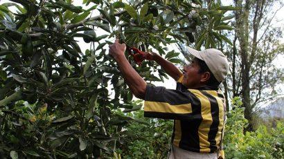 COLUMNA DE OPINIÓN – De espaldas a 81% de trabajadores agrarios